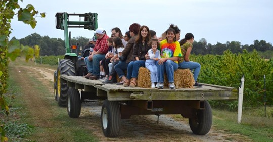 Fall Hayride Tour & Tasting