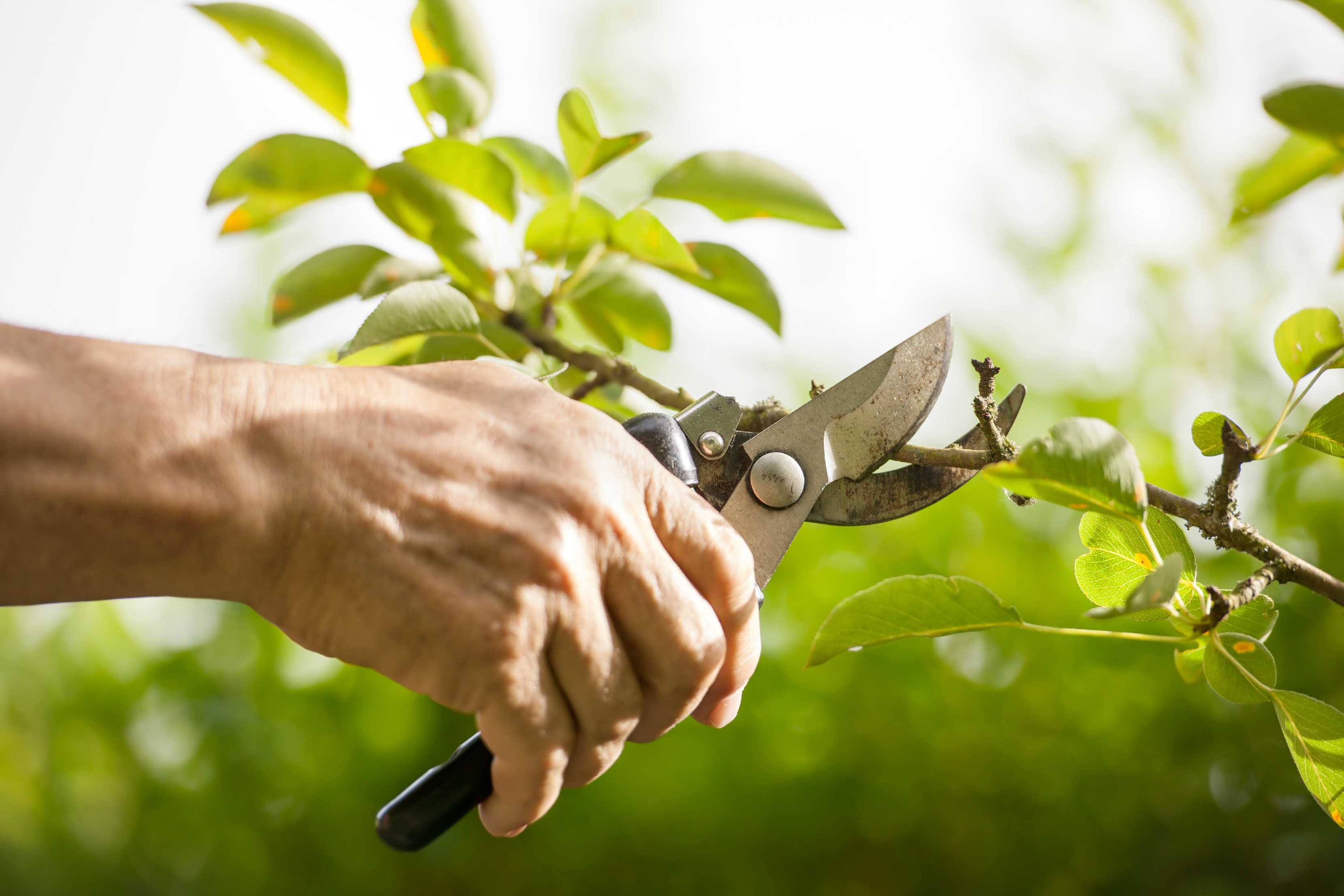 Kingstown Farm Home and Garden Horticulture Meeting: Pruning