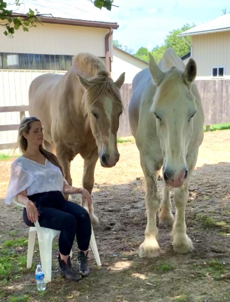 Meditation With Horses/ PEMF Demo
