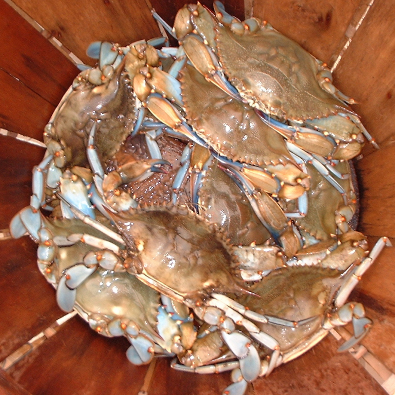 Clark's Seafood